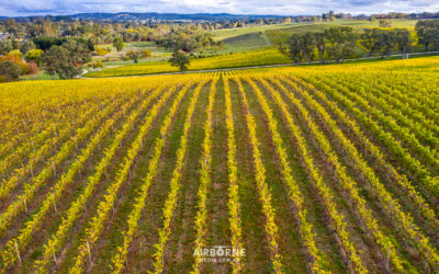 Bespoke Winery Tours to take you around the Adelaide Hills…