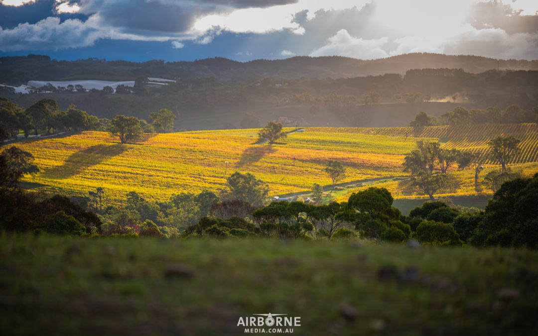 What are some of the highlights of the Adelaide Hills?